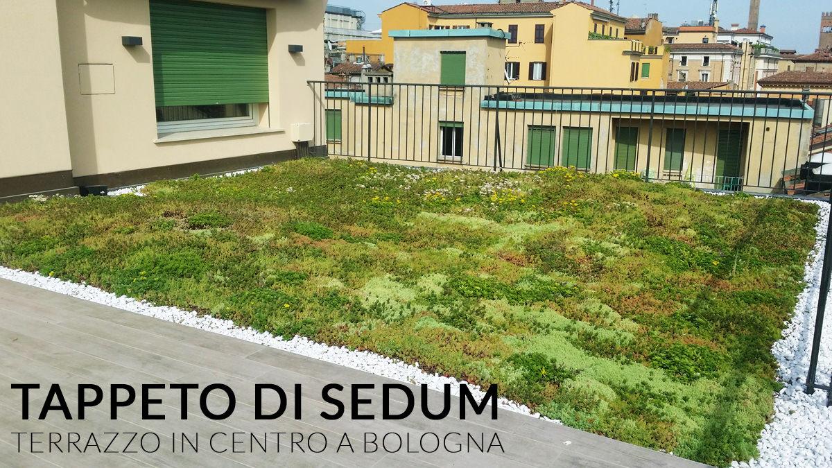 terrazzo_sedum_mini