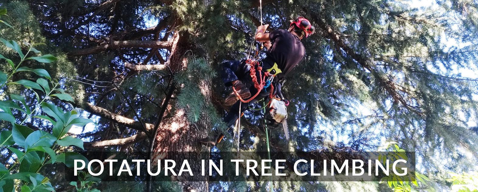 TREE_CLIMBING_SERVIZI_mini