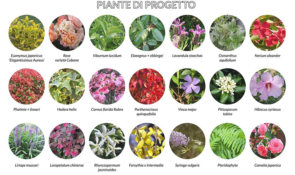 piante progetto-min
