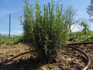 Irrigazione per siepi e alberi